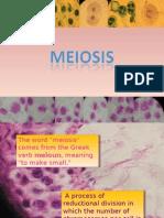 Bio Meiosis