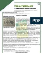 DOMINIO ARQUEO - EUBACTERIAS