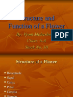 Structure and Function of a Flower