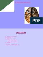 El Sistema Nerviso Central