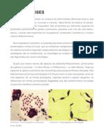 6365 Crmv-pr Manual-zoonoses Leishmanioses