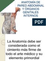 anatoma pelvica presentacion