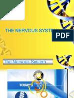 Nervous Sytem V3