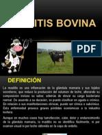 Mastitis bovina.pptx