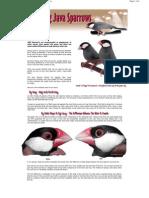 Java Sparrow Sexing