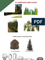 Le Forme di Allevamento Arboree