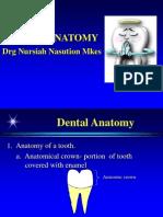 A06 Dental Anatomy