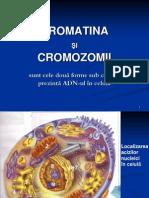 Cromatina Cromozomi