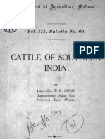 Cattle of Southern India 1909