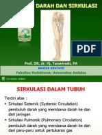 Sistem sirkulasi pembuluh darah