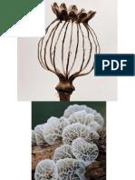 Botanical for Screen Printing FALL '13