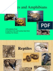 3 Rd Grade Reptiles and Amphibians
