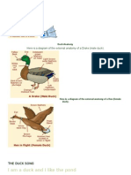 Duck Anatomy