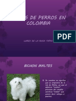 Razas de Perros en Colombia
