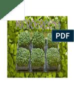 Manual Growing Microgreens at Home