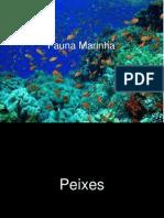 Fauna Marinha