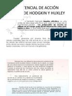EL POTENCIAL DE ACCIÓN MODELO DE HODGKIN Y (2)