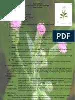 Herbarium Baru