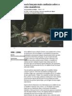 Dois novos fósseis lançam mais confusão sobre o aparecimento dos mamíferos - PÚBLICO