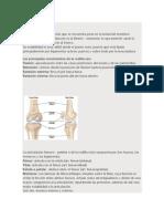 Articulaciones, Clasificacion y Tipos de Ligamentos y Articulaciones