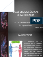 Bases Cromosomas