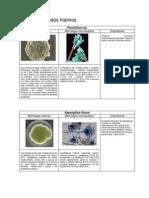 Atlas de Micologia Jmcm Iysr Completo