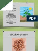 Cultivo de Frijol