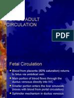 Fetal & Adult Circulation