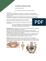 ANATOMÍA Y FISIOLOGÍA BÁSIC1