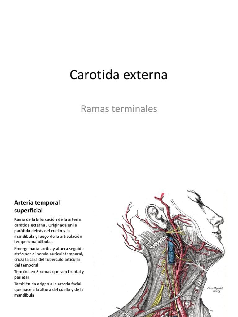 Único Arteria Temporal Anatomía Biopsia Ilustración - Anatomía de ...