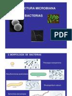 Estructura 2 Morfología Bacterias [Modo de compatibilidad]