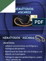 3_nematodos-ascaris-1198624340989106-3