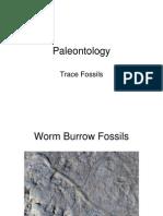 trace-fossils.pdf