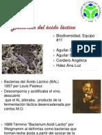 11- Bacterias del ácido láctico