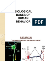 chapter4-biologicalbasesofhumanbehavior-130116203947-phpapp02