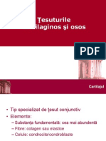 Tesuturile cartilaginos & osos
