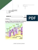 Clase 3 Guia de membrana celular  y transporte.rtf