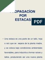 Propagacion Por Estacas