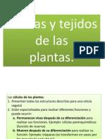 tejidosvegetales-ppt-120227002840-phpapp01