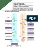 ArreolaG_Practica de Metabolismo de Carbohidrato Para El Foro