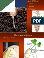 Aula3_Meristemas_Apicais