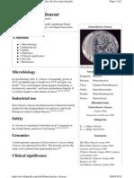 En.wikipedia.org Wiki Enterobacter Cloacae
