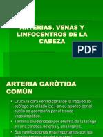 28 Arterias, Venas y Linfocentros de La Cabeza