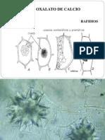 Farmacobotanica Clase 4.