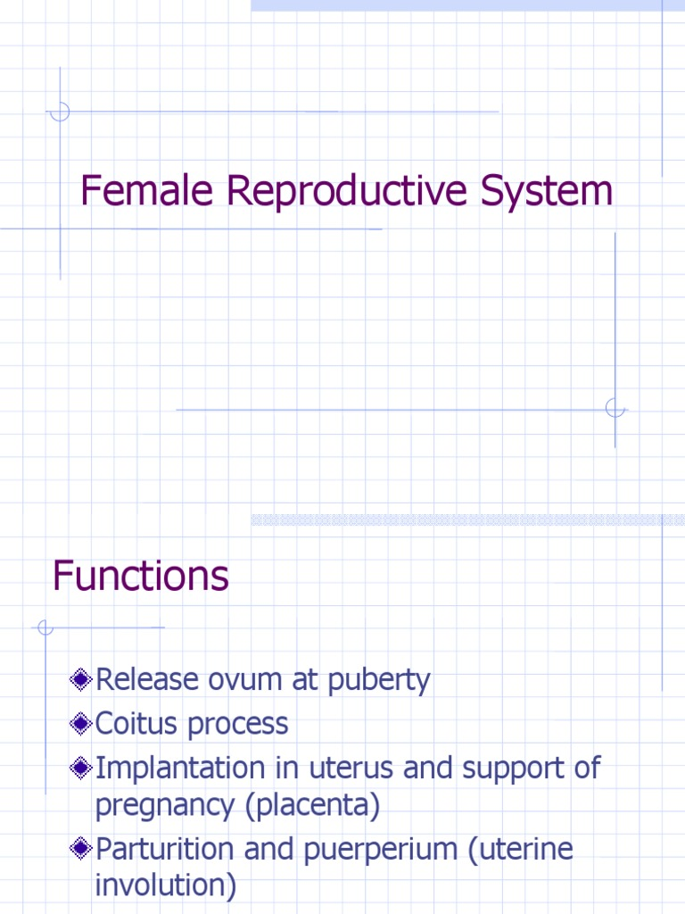 Female Reproductive System Menstrual Cycle Menstruation