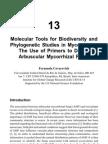 Phylogenetic Studies in Mycorrhizas