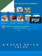 Gallos Diapositivas M.V