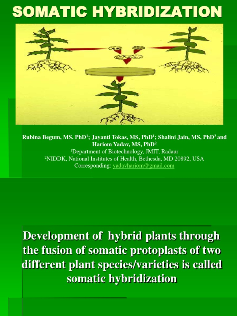 Somatic Hybrization | Hybrid (Biology) | Ploidy