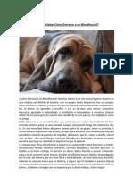 Entrenar a Un Bloodhound