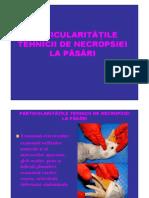 LP Necropsie Pasare Recoltari MV6